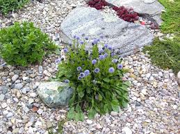 White Rock Garden Rock Garden Flowers Thumb Of White Rock Garden Flowers Alexstand