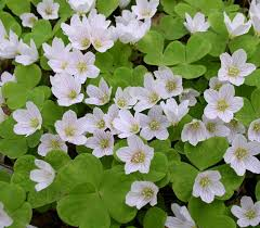 Low Maintenance Plants And Flowers - 25 types of flowers to plant for summer summer flowers