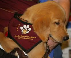 Dogs Helping Blind People 77 Best Services Dogs Images On Pinterest Service Dogs Animals
