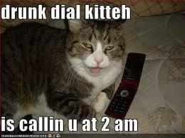 Drunk Cat Meme - drunk dial kitten calling at 2 am cat funnies pinterest