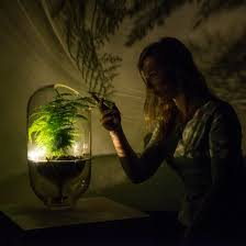 living light is an grid l powered by photosynthesis