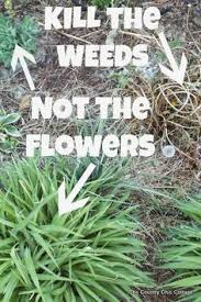 How To Mulch Flower Beds Smother Weeds In Flower Beds With Newspaper Spray With Water