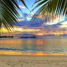Palm Tree Wallpaper Download Wallpaper 2732x2732 Beach Tropics Sea Sand Palm Trees