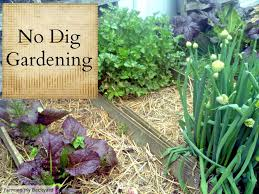 how to get started gardening farming my backyard