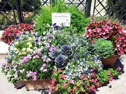 Container Garden Design Ideas Sun Container Garden Ideas Noharm Club