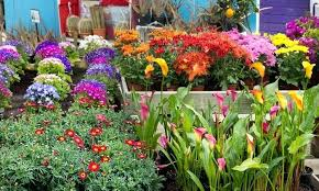 Rock Garden Plants Uk Garden Plants Sale Customer Reviews Rock Garden Plants For Sale Uk