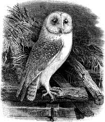 clipart owl black and white top 86 barn owl clipart free clipart image