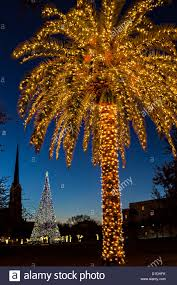 palm tree covered in fairy lights for christmas in historic marion
