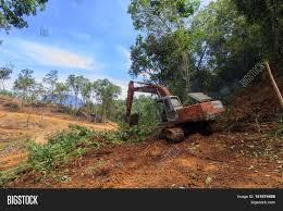 deforestation borneo tropical rainforest is destroyed for oil