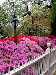 Azalea Topiary Tips On Growing Boxwood Hgtv