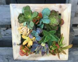succulents planters terrariums garden and home by bellasjardin