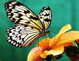 free images nature blossom wing plant flower bloom floral