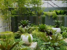 Cycads In The Garden Tropical Design Pinterest Tropical