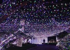 family strings 31 worth of led lights for lavish