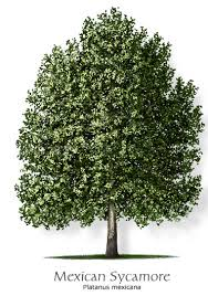 thinking about adding trees to your landscape now is the time