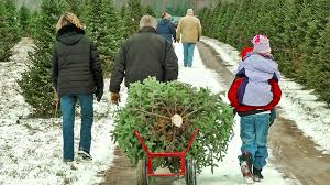 where to buy a tree in central massachusetts discover