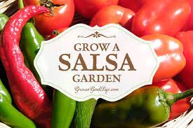 10 Tips For Growing Peppers by Grow A Salsa Garden