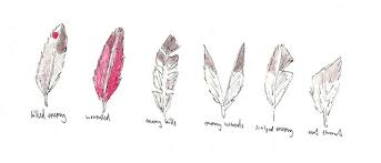 meaning of feathers 1 killed enemy 2 wounded 3 many kills 4 many