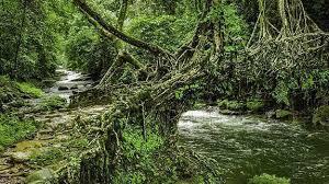 how to reach living root bridges in meghalaya india com