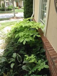 slideshow of our best shade plants u2014 b b barns asheville u0027s