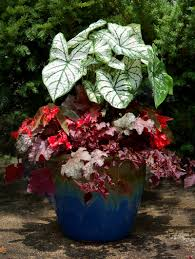 Plants For Patio by Best Shade Container Plants Container Gardens Shade Containers