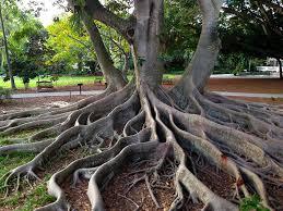 Botanical Gardens Sarasota Fl Selby Botanical Gardens Florida Hikes