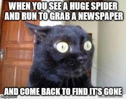 Newspaper Cat Meme - scared cat memes imgflip