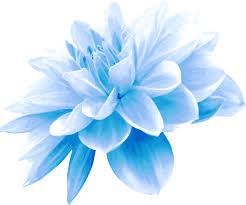 blue flower clipart blue flower