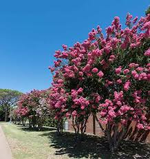 beautify your property with ornamental trees and shrubs