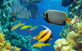 marine life coral colorful tropical fish wallpaper