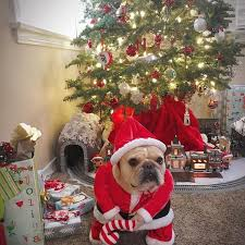 948 merry frenchie christmas images french
