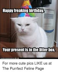 Cute Birthday Meme - happy freaking birthday your presentisin thelitter box for more