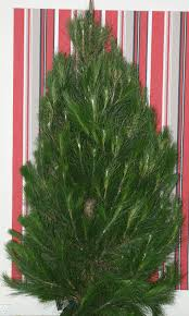 dural christmas tree farm sydney