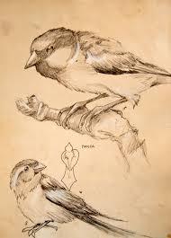 bird sketches l kozik u0027s art blog