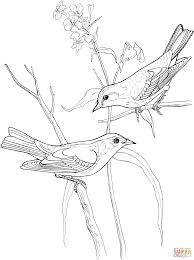 yellow finch coloring pages download and print for free