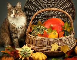 thanksgiving for pets writers giving thanks