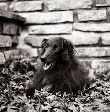 In Loving Memory Dog Tags In Loving Memory Indiana Daily Dog Tagdaily Dog Tag
