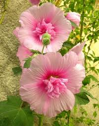 Images Flowers 240 Best Floral Inspiration Images On Pinterest Flowers Flower