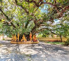 buddha the bodhi tree in vientiane laos they are