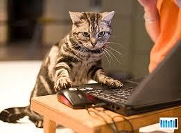 Working Cat Meme - working cat blank template imgflip