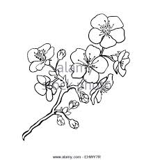 cherry blossom tattoo stock photos u0026 cherry blossom tattoo stock