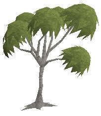 Fruit Trees Runescape - eucalyptus tree information the full wiki