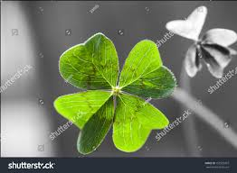 macro 4 leaf clover shadow some stock photo 152335907 shutterstock