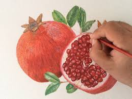 lychee fruit drawing how to draw a pomegranate youtube