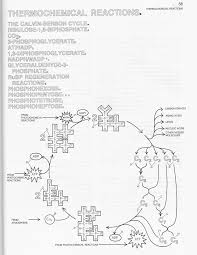 Mrs Kannady S Classes Q2 Week 6 11 23 11 27 Photosynthesis Coloring Page