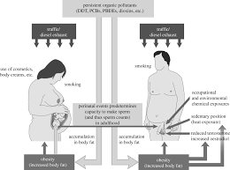 environmental lifestyle effects on spermatogenesis philosophical