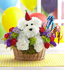 Dog Flower Arrangement A Dog Able Dog Flowers U0026 Gifts For Dog Lovers 1800flowers Com
