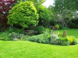 free images grass plant lawn flower park backyard botany
