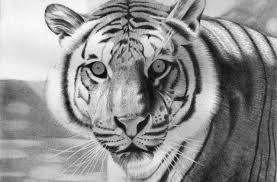 tag for cute animal pencil drawing cute baby animal drawings in