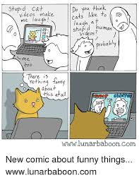 Stupid Cat Meme - 25 best memes about stupid cat stupid cat memes